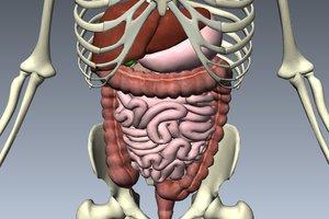 Диагностика и лечение заболеваний органов пищеварения