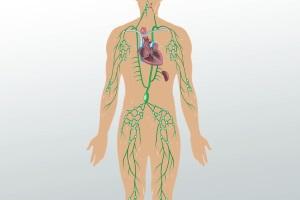 Строение и функции иммунной системы. Лекция № 2. Врожденный неспецифический (естественный) иммунитет. Гуморальный иммунитет