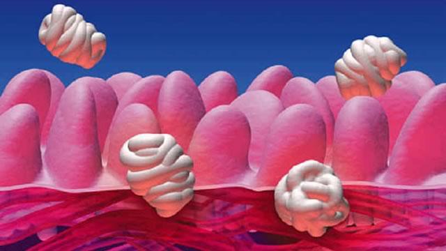 Пробиотики, дисбактериоз, восстановление кишечной флоры