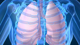 Отчего возникает воспаление легких (пневмония)?