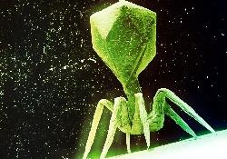 кишечный вирус