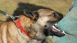 Первая помощь при укусах собак