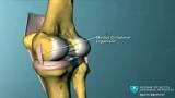 Как устроен коленный сустав